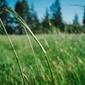 Łąka - plakat wymiar do wyboru: 42x29,7 cm