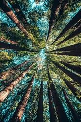 Korony drzew – plakat wymiar do wyboru: 70x100 cm