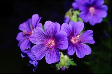 Fototapeta kwiaty 79