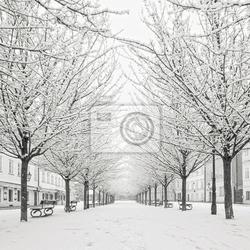 Fototapeta drzewo śnieg na wyspie kampa, praga