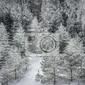 Fototapeta zimowy las w śniegu
