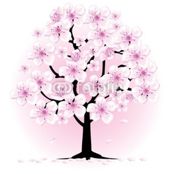 Tapeta ścienna kwiat wiśni