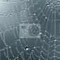 Naklejka monochrome krople deszczu na sieci pajęczej