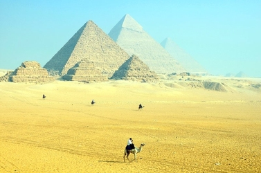 Fototapeta wielbłąd na tle piramid fp 1853
