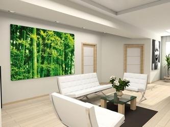 Bambusy wiosną - fototapeta