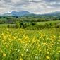 Łąka pełna kwiatów pireneje - plakat premium wymiar do wyboru: 100x70 cm