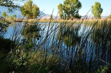 Fototapeta zarośla na brzegu jeziora fp 1693