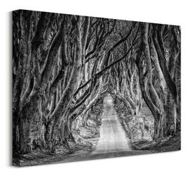 Droga przez las - obraz na płótnie