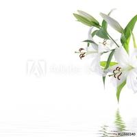 Plakat na papierze fotorealistycznym biały kwiat lilia - tło wzór spa