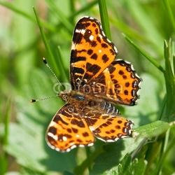Obraz na płótnie canvas motyl