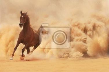 Fototapeta arabian horse wyczerpaniu desert storm