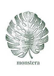 Liść VIII - monstera - plakat Wymiar do wyboru: 29,7x42 cm