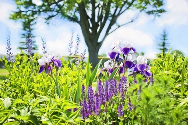 Fototapeta kwiat, kwiaty polne 362