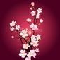 Naklejka samoprzylepna kwitnące drzewa