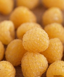 Malina żółta allgold smaczna słodka