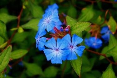 Fototapeta kwiat 371