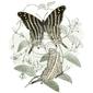 Naklejka les motyle