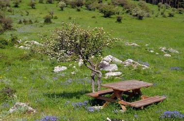 Fototapeta ławka na polanie w górach fp 1461