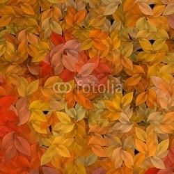 Obraz na płótnie canvas czteroczęściowy tetraptyk jesienne liście