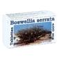 Boswellia serrata 400 mg tabletki z żywicą z kadzidłowca