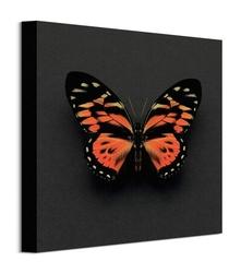 Motyl tygrysi - obraz na płótnie