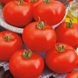 Pomidor phantasia f1 – duże owoce – kiepenkerl