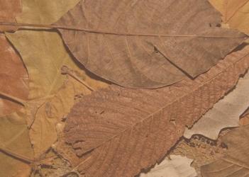Tablica suchościeralna 160 liście