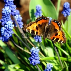 Obraz na płótnie canvas dwuczęściowy dyptyk motyl