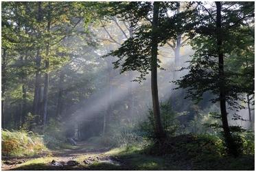 Fototapeta słońce przedzierające się promieniami przez las fp 1618