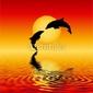 Plakat na papierze fotorealistycznym delfiny
