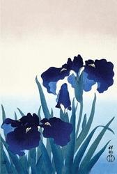 Niebieskie irysy - plakat