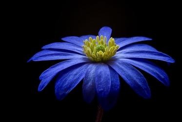 Fototapeta kwiat 310