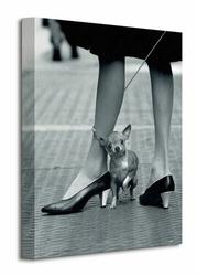 Time Life Chihuahua - Obraz na płótnie