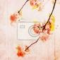 Obraz grungy tła z wiśni