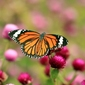 Fototapeta motyl i kwiaty fp 2835