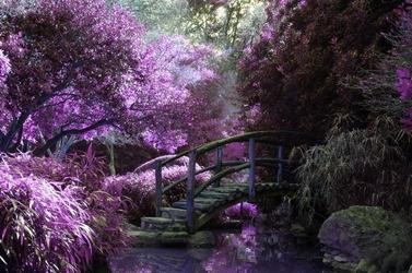 Fototapeta japoński ogród fp 1525