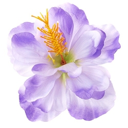 Hibiskus satynowy 14 cm - fioletowy - fioletowy