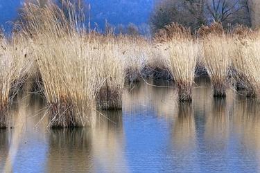 Fototapeta na ścianę wysokie trawy na mokradłach fp 1610