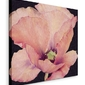 Delicate pink poppy - obraz na płótnie
