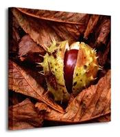 Jesiennie, kasztan - obraz na płótnie