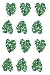 Monstera liście - plakat Wymiar do wyboru: 21x29,7 cm
