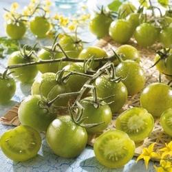Pomidor limetto f1 – cherry – nasiona kiepenkerl