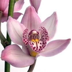 Tapeta ścienna kwiat 5a