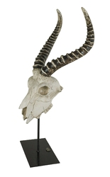Authentic models czaszka antylopy ar062