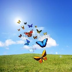 Plakat na papierze fotorealistycznym motyle w lecie
