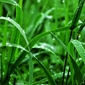 Fototapeta morka soczysta trawa fp 788