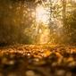 Ścieżka w lesie - plakat wymiar do wyboru: 70x50 cm