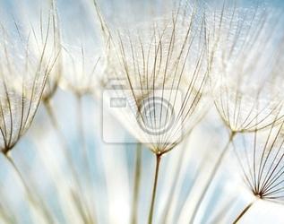 Obraz streszczenie kwiat mniszka