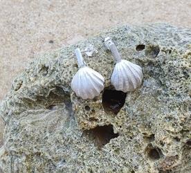Muszelki białe - kolczyki srebrne