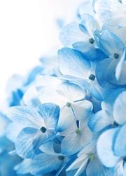 Niebieskie kwiaty - fototapeta